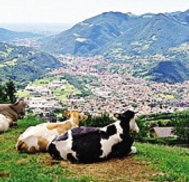 Alpeggio in Val Gandino