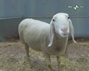 A Geo&Geo l'antica tradizione della lavorazione della lana