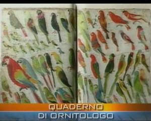 Arte e scienza nel quaderno dell'ornitologo