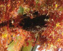Le api in cerca di una nuova sistemazione al Centro pastorale